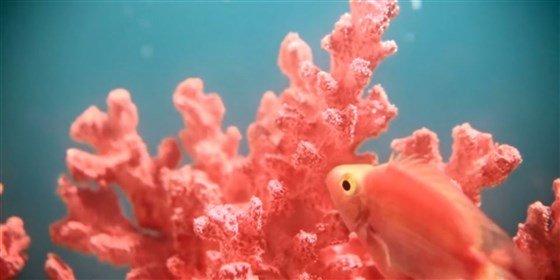 2019 Living Coral fish